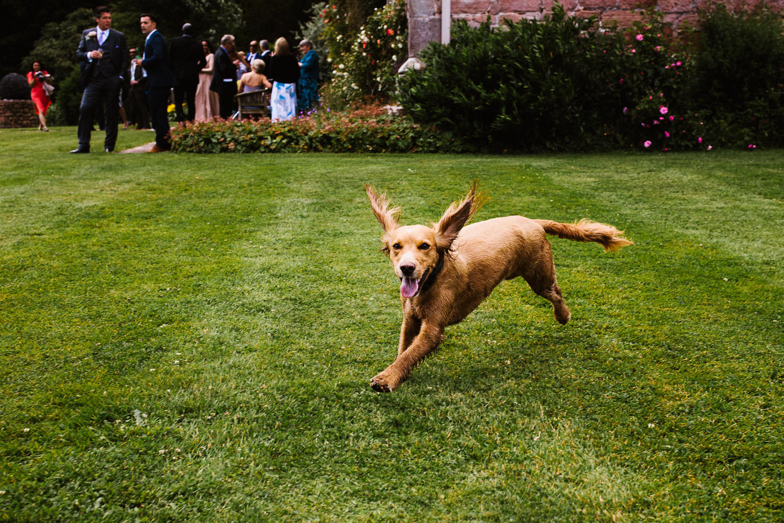 Dog running on the lawn